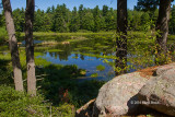Beaver Pond at the Foley Mountain Conservation Area
