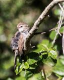 Bird with Poison Oak
