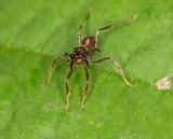 Fierce little ant