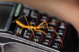 bug on watch