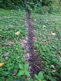 Leaf-cutter ants on their path