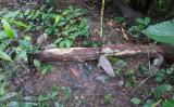 Slime Mold on Log