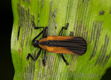 Bumpy Beetle