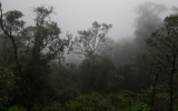 Cloud Forest 2560x1600