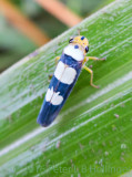 blue-and-white hopper