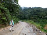 Lush roadside