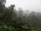 Cloud Forest near Tapichalaca