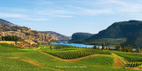 Blue Mountain Vineyards (8515-8628)
