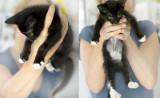 new_kitten