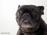 Honden, groot en klein  - all kinds of dogs