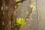 Las Bromelias Abundan en el Lugar