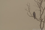 Bluebird in the fog