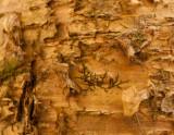 bark and lichen