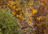 Shenandoah National Park, October