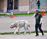 Walking the Dog and Talking