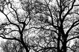 Random Lines in Trees