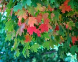 If Leaves Can Change Colors, Can't Politicians?