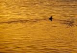 A Sunset Glide