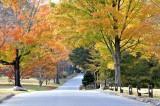 A Colorful Walk