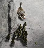 Follow Me Children