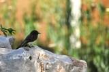 Just a Little Bird