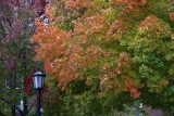 Autumn in a Small New England Town