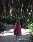 Into The Forest The Little One Goes…