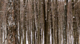 Lines in the Winter Woods