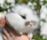 Rabbit 05.jpg