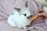 Rabbit 08.jpg