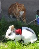 Rabbit 13.jpg