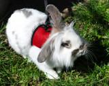 Rabbit 24.jpg