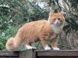 Ginger 01.jpg