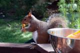 Squirrel !!!!