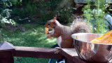 Squirrels love melon!