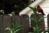Cardinal Visit