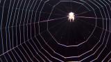 Spider Surreal