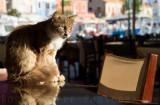 kef cat.jpg