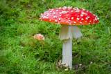 red fungus-fb.jpg