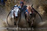 Bull race