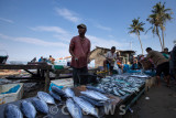 Morning fish market