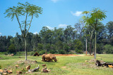 Rhinoceros at Australia Zoo.