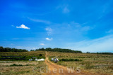 Cultivated farm land