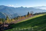 Cingjing Farm, Nantou county (altitude 2000m)
