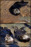 Otter Force original