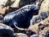 black seal .jpg
