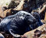 black seal s 2.jpg