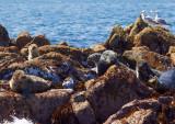 seal colony 1.jpg
