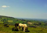 horse and hillside