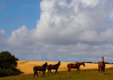horses and clouds 2.jpg